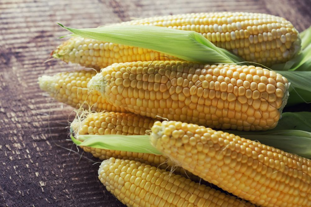 Fresh Sweet Corn is Not Low FODMAP